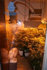 Otra imagen de la plantación de marihuana encontrada por la Policía Nacional.