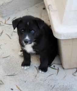 Una de las mascotas ayudadas por la nueva asociación.