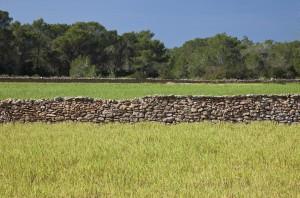 Imatge d'una paret de pedra seca a Formentera.