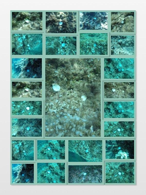 Collage de imágenes de ostras rojas muertas en la costa de Portinatx, en Ibiza. Autor Alejandro Pola.